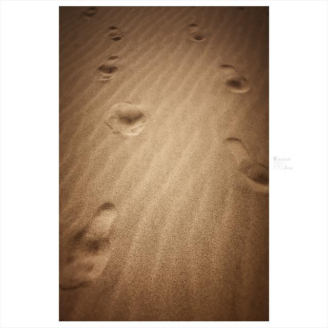 SM奴隷と外出。露出奴隷が砂浜に書く文字といえば 野外露出・野外調教